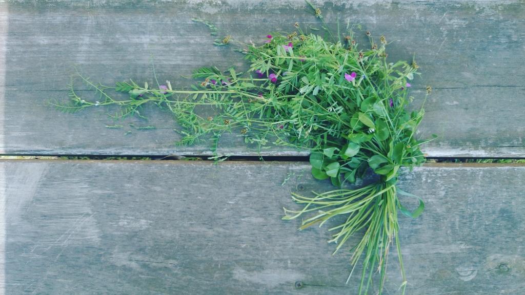 春の野の花 キャスケードブーケ カラスノエンドウ スズメノエンドウ スズメノヤリ スズメノカタビラ シロツメグサの葉